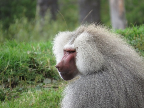 Take that picture from my better side please? Auckland Zoo