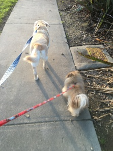 Getting that exercise with my stand-in 'chief testers' this afternoon.