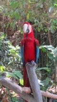 Up close to the local birdlife
